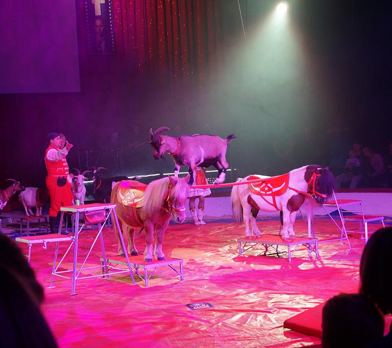 cirkusscott getter