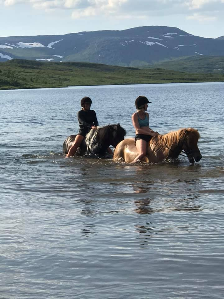 simning med islandshästar