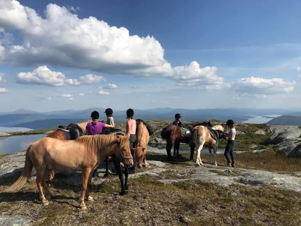 hästar på fjället