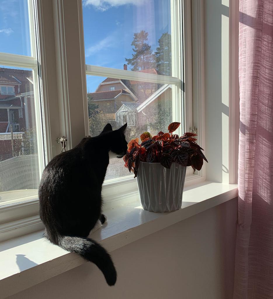 Frida i fönstret